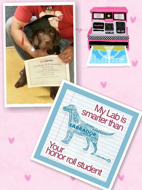 Akira 4 months graduation day puppy training