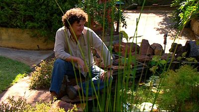 Gardening Australia - Fact Sheet: Backyard Frog Ponds