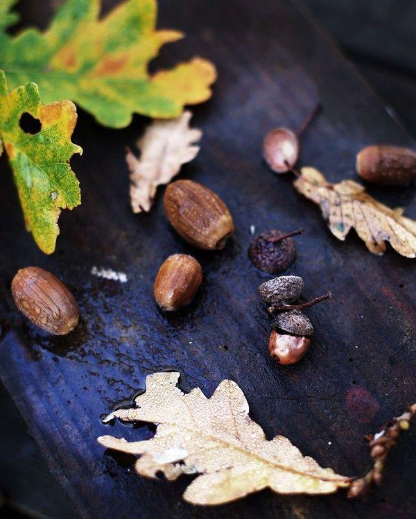 Finast i veckan; en oktoberbukett, ett inspirerande hemmakontor och ett magiskt recept | Volang | Bloglovin'