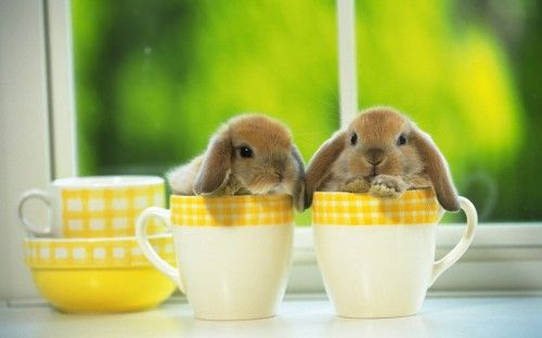 bunniesRabbit, Teas For Two, Teas Time, Teas Cups, Easter Bunnies, Baby Bunnies, Cute Bunnies, Baby Animal, Teacups