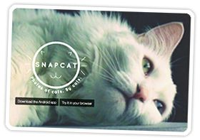 The Latest in Photo App Hacks — An App That Teaches Your Cat Photography & More! | Photojojo