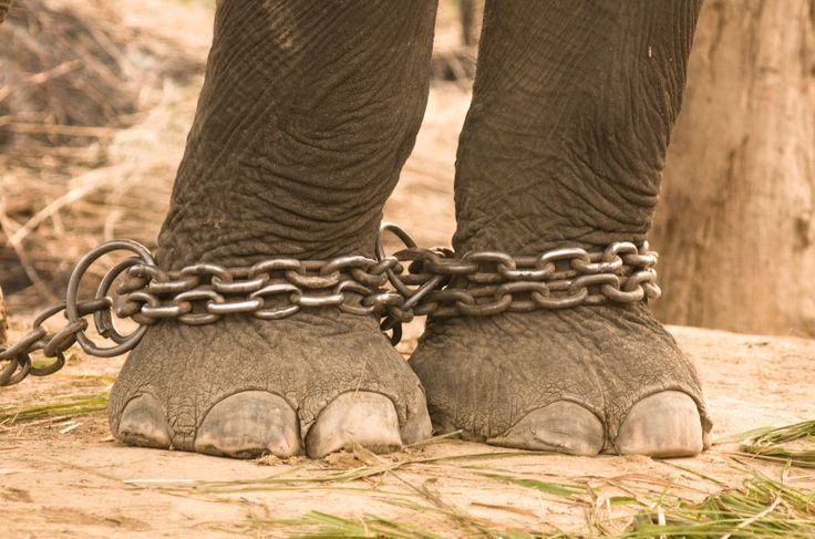 A partir deste mês, o FBI (Agência Federal de Investigação) passará a tratar maus-tratos aos animais como crimes graves.