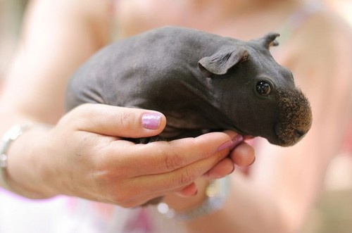 Baby hippo. Oh, yes.