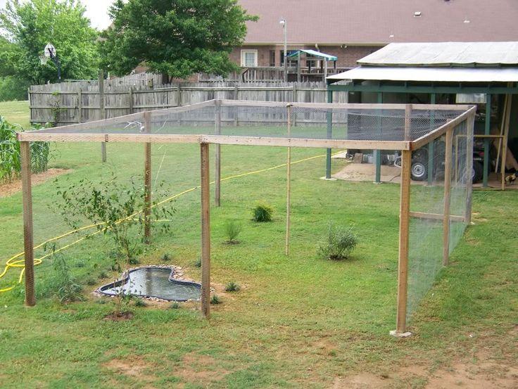 plants for the quail pen | http://i178.photobucket.com/albums/w268/Caleb273/100_1383.jpg