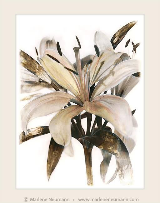 LILY II..Today I give you the gift of a beautiful flower..this image reminds us to be gentle with ourselves..grateful for the people in our lives..reminds us to go outside and plant a garden..hug someone today..Love Marlene