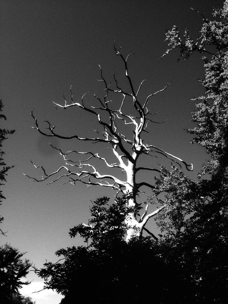A arbre perdu, France.