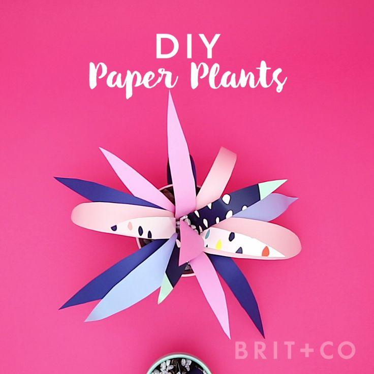 You can make paper plants using Cheeky plates by following this creative video DIY tutorial.