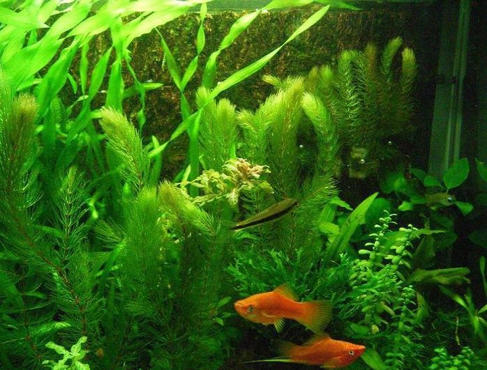 Hot selling 200pcs aquarium grass seeds (mix) water aquatic plant seeds (15 kinds) family easy plant seeds free shipping