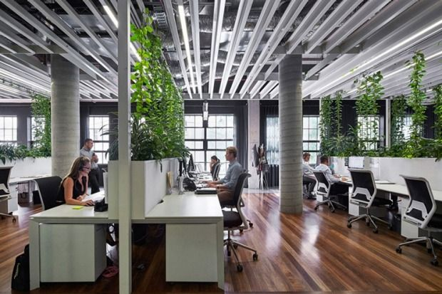 In the Sydney offices of property group BresicWhitney designed by Chenchow Little Architects, creeping Devil's Ivy (Golden Pothos) climbs up staywires forming living privacy screens. After trialling specific plants to see which performed the best, a selection of around 60 are now thriving in planter boxes between workstations.