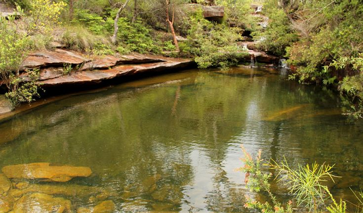 Go walking along Hominy Creek walking track in Popran National Park to the picturesque crystal clear waters of Emerald Pool.