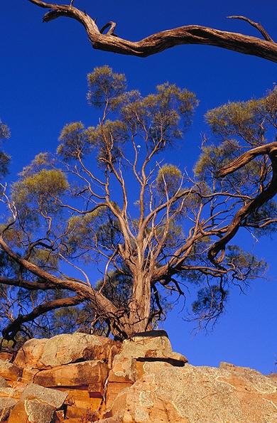 Gundabooka National Park NSW Australia