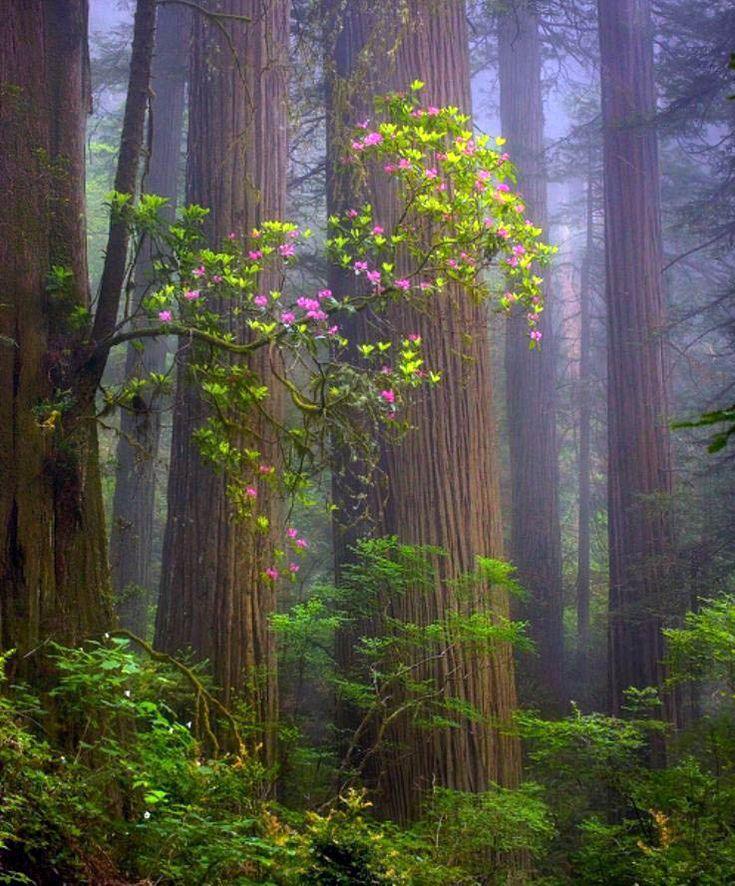 Тоскую, анимация картинки леса