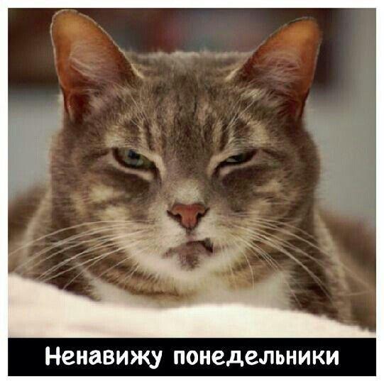 Лицо кота в понедельник