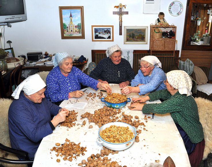 Diótörés Ferencz Józseféknél régi sváb hagyomány került felelevenítésre a diótörés. Ilyenkor az asszonyok összegyűltek és énekléssel, főzéssel töltötték az időt. Több kép Zsolttól: www.facebook.com/zsolt.hrubos és www.hrubosfoto.hu
