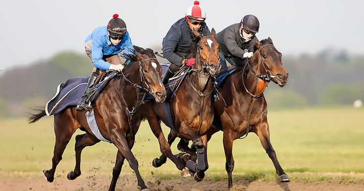 100s Horse Trainer Websites, Blogs, Twitter Links & Face Book Pages. Free!  Click This Link For Instant ACCESS.