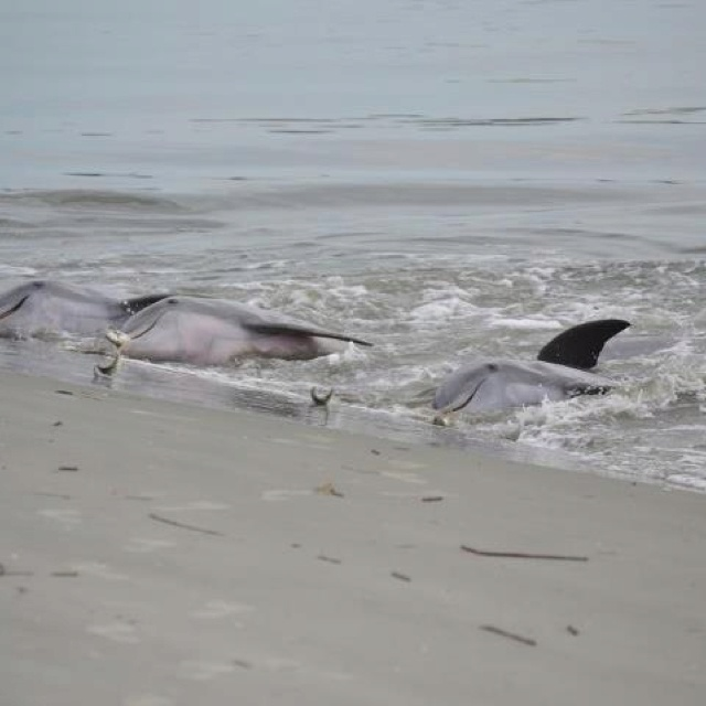 Dolphin Feeding At Seabrook Island Sc Travel Pinterest Places And Sout