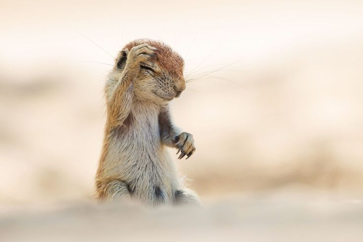 These Are the 13 Funniest Wild Animal Photos of 2015   - HouseBeautiful.com
