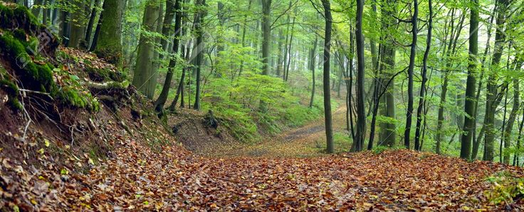 previews.123rf.com images konzeptm konzeptm1210 konzeptm121000178 15920588-Dirt-road-in-the-mixed-forest-beech-oak-and-hornbeam-in-a-misty-day-autumn-Saarland-Germany-Stitched-Stock-Photo.jpg