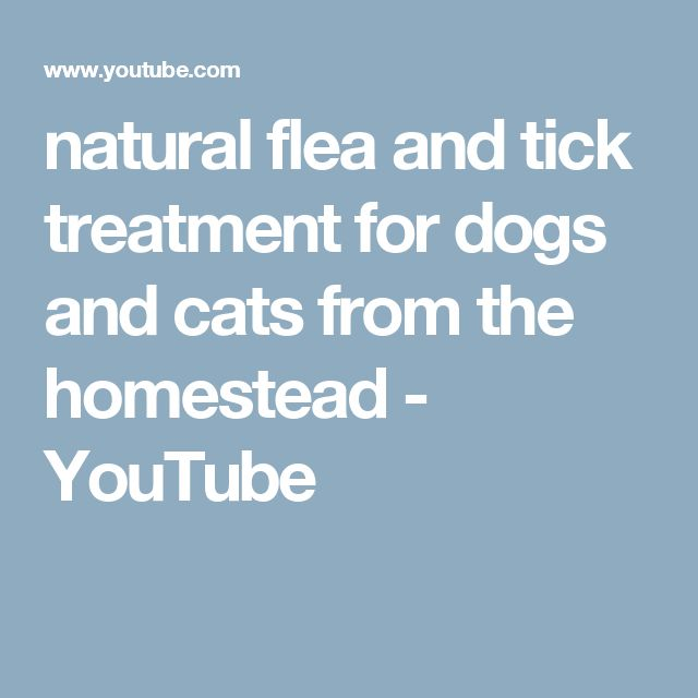 natural flea and tick treatment for dogs and cats from the homestead - YouTube