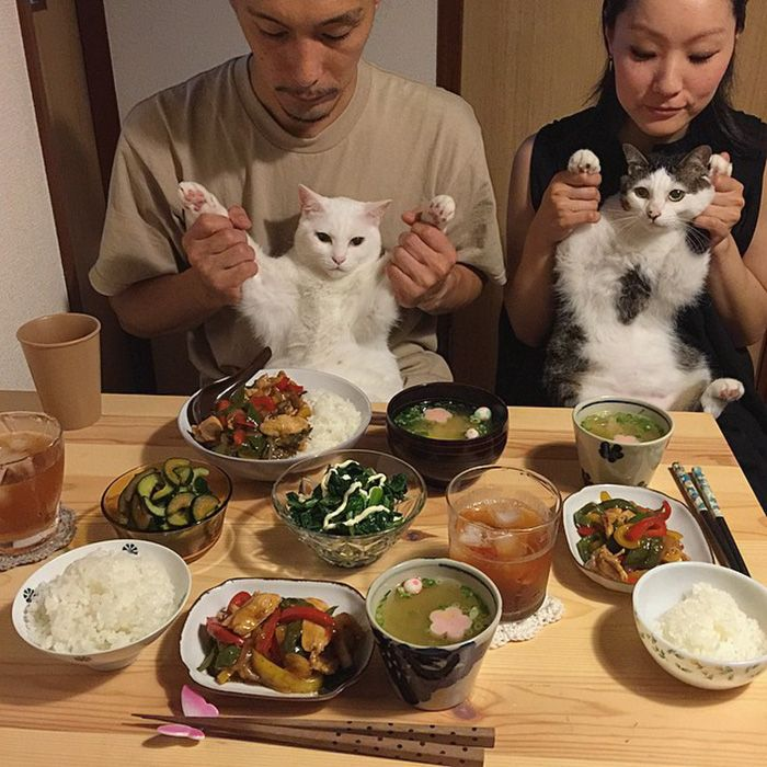 No matter how hard asleep, my cat would always wake up and race downstairs when he'd hear my mom chopping meat. But he'd only stick around while she was cooking. However, these two cats from Japan also awkwardly watch their humans eat. Every single time.
