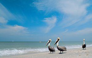 La Floride sauvage - Châtelaine