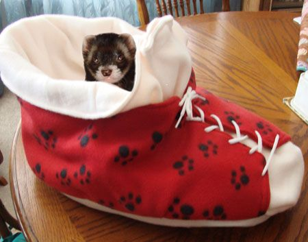 How to make a shoe bed :D http://www.smallanimalchannel.com/ferrets/ferret-housing/sew-a-shoe-bed.aspx
