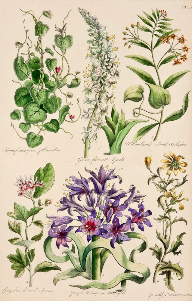 17 best images about botanical on pinterest vintage for Botanic fleurs artificielles