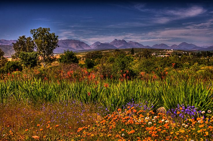 Namaqualand in Bloom, South Africa