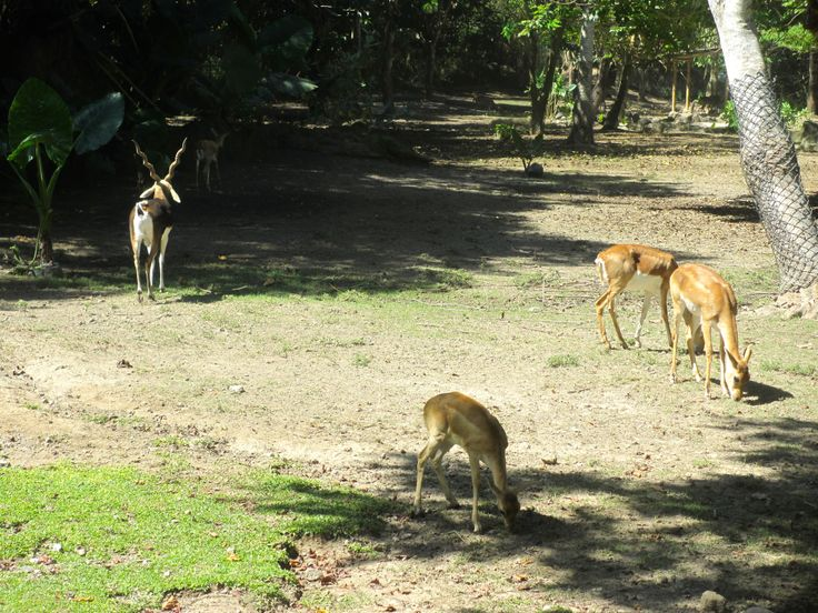 Comme des gamins au Bali safari and marine park