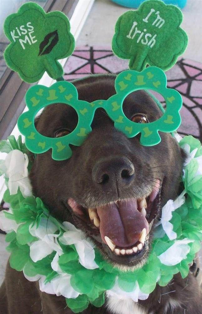 St Patrick's dog