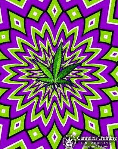 The illusion of Marijuana texture | theCTU.com