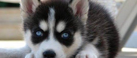 addestrare-cucciolo-al-guinzaglio