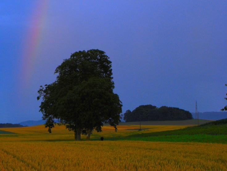 Arc-en-ciel et arbre au coucher du soleil, été 2012
