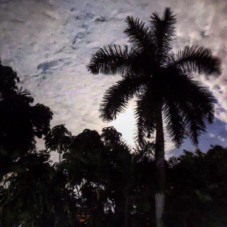 Lluna plena a La Habana #havana #habana #miramar #cuba #night #fullmoon #moon #light #moonlight #bluemoon #palmtree #magic #total_cuba #total_sky #total_night #loves_cuba #loves_habana #loves_night #ig_cuba #ig_habana #ig_nightphotography #ig_moon #noflash #garden by mercecg64