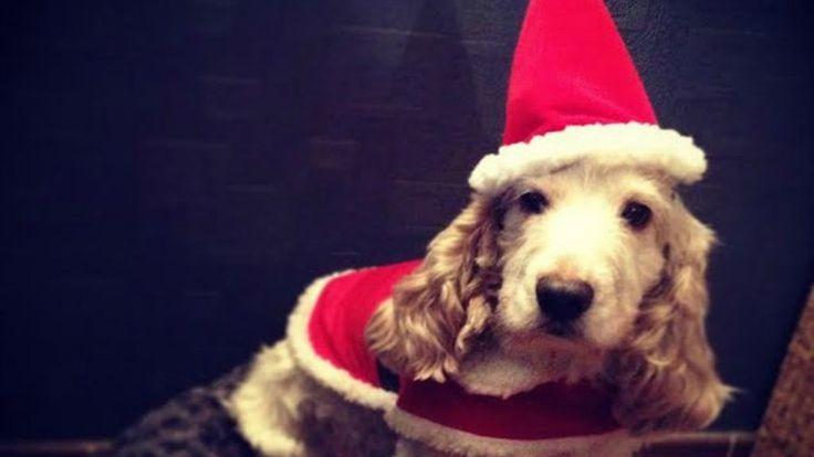 6 Pets Celebrating Christmas Season