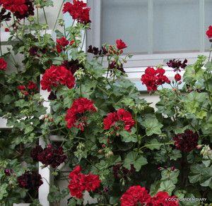 我が家の前を通る人には赤い薔薇のお家として記憶している方も多いらしい… 表で花柄...