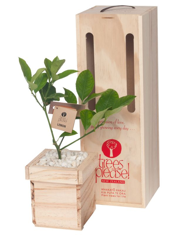 Beautifully boxed fruiting tree gifts by Trees Please!