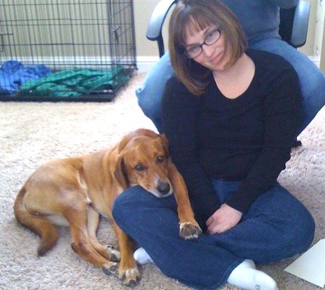 Dog Training Harness Zak George S Dog Training Revolution