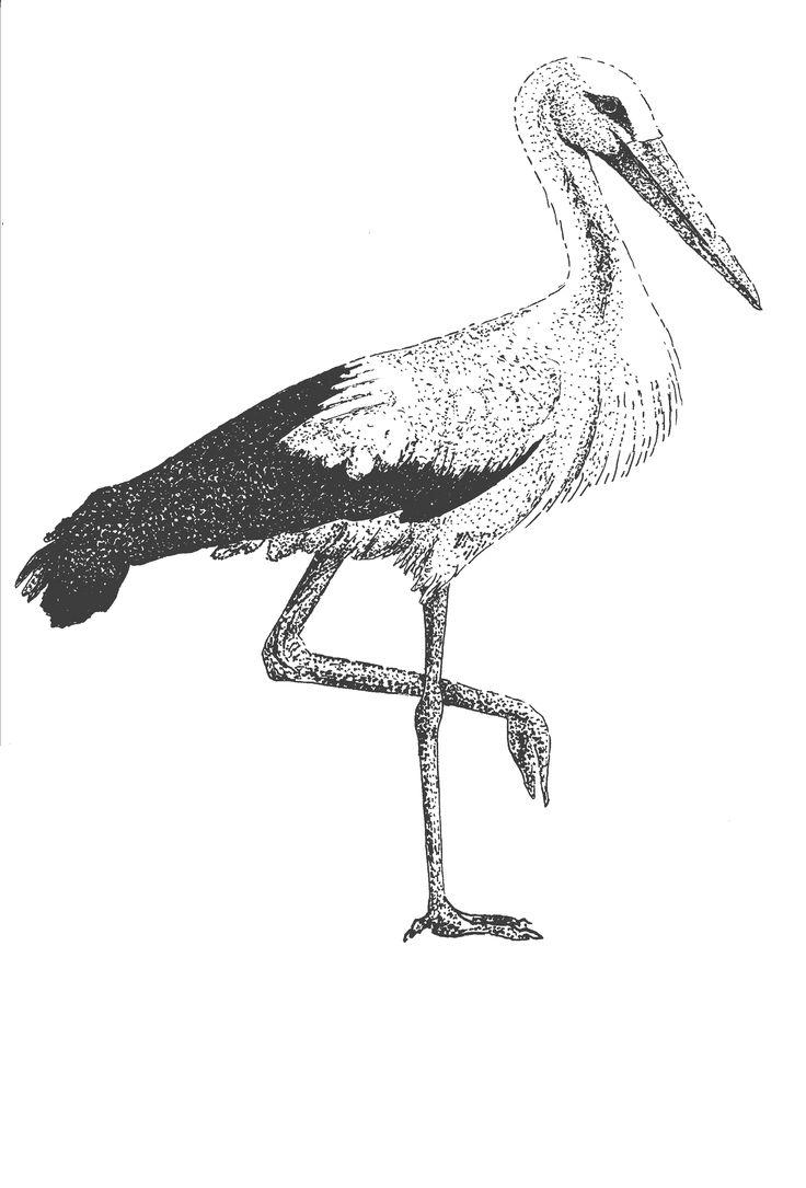 stork illustration