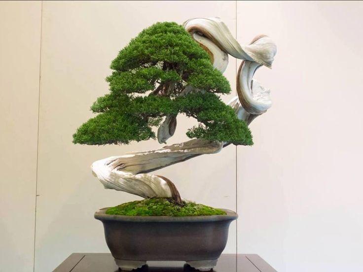 art of bonsai #TAEKUKIWONBONSAI.