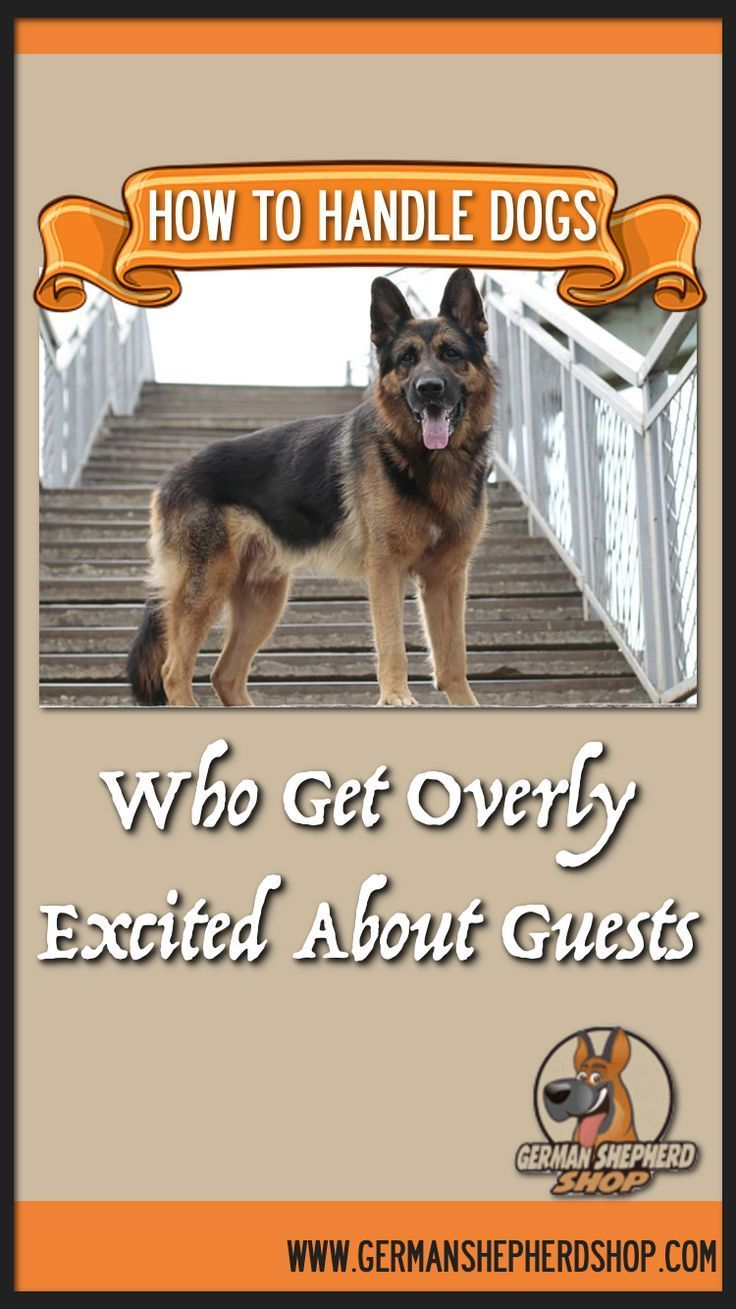 How To Handle Dogs Who Get Overly Excited About Guests German