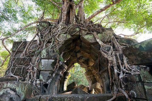 森に飲まれた古の廃墟「ベンメリア遺跡」密林の奥地で修復を阻むものとは・・・。