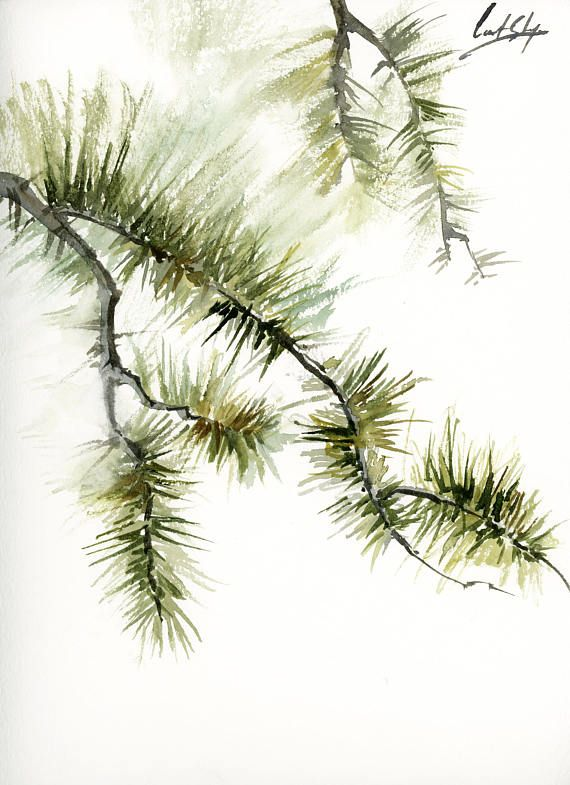 Pine Tree Branches Original Watercolor Painting Modern Minimalist