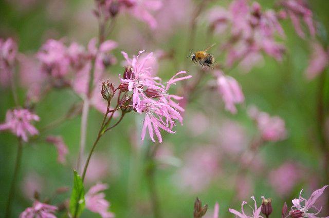 Wildlife garden (c) Buglife