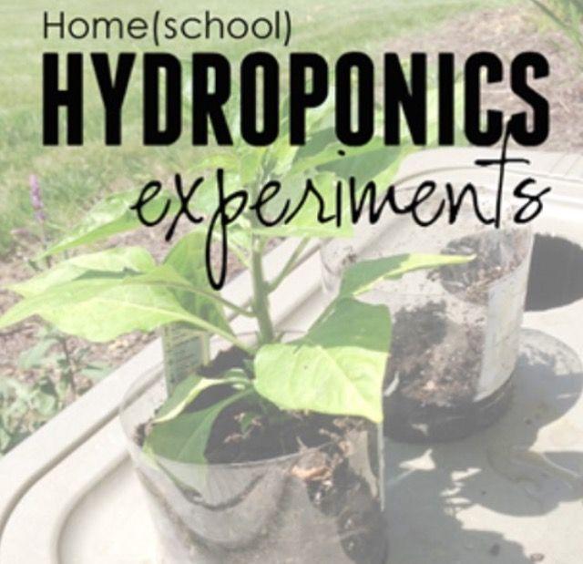 Home Hydroponics Experiments