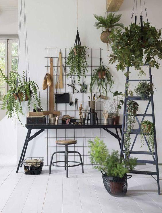 456 besten Decorative plants Bilder auf Pinterest | Zimmerpflanzen ...