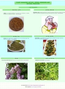 Thistle recipes?! Who knew?