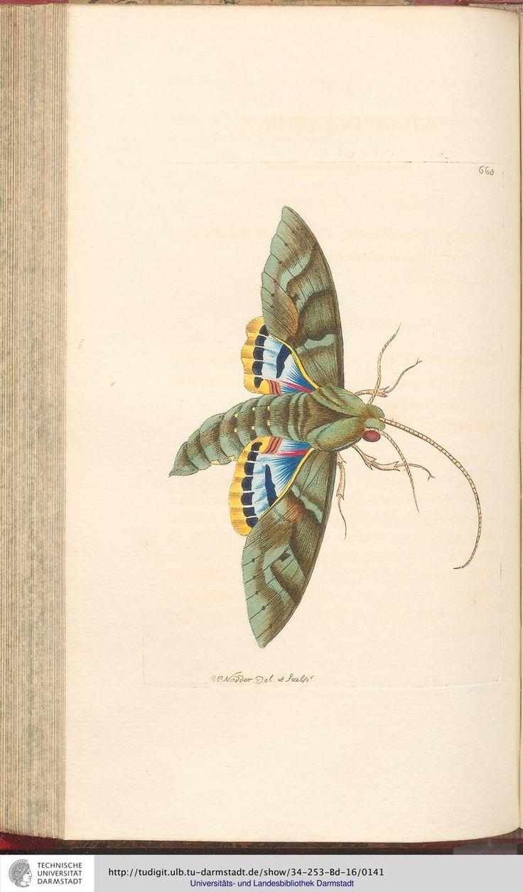 Fresh Moth illustration