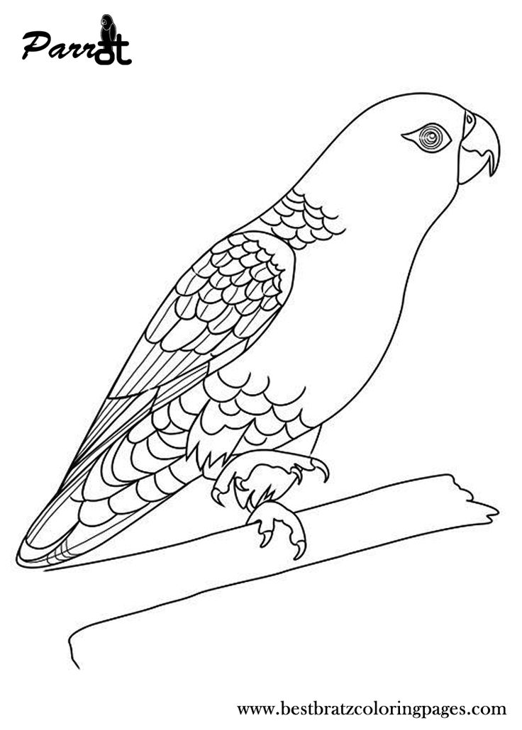 free printable parrot coloring pages for kids coloring pages bird coloring pages animal. Black Bedroom Furniture Sets. Home Design Ideas