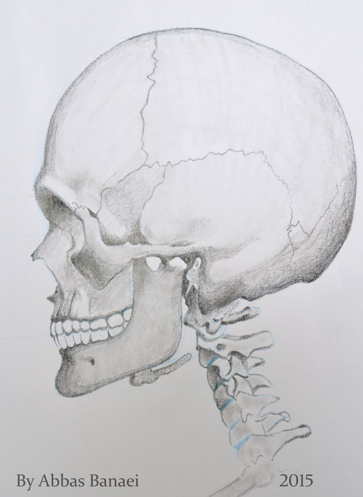 Side view of the skull. Pencil. 20*30 Cm